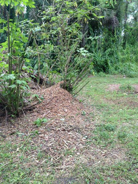 Improving The Soil In Your Garden Gardeners Of Southwest Florida Naples Fl Meetup