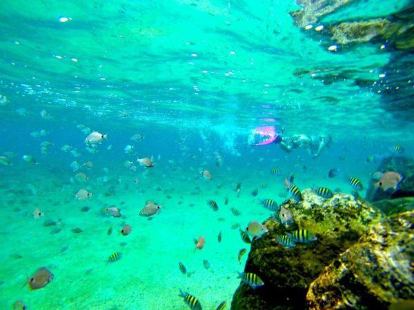 Snorkeling West Palm Beach Peanut Island
