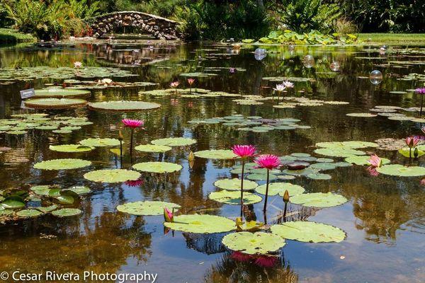 Mckee Botanical Garden Flower Photography New Way