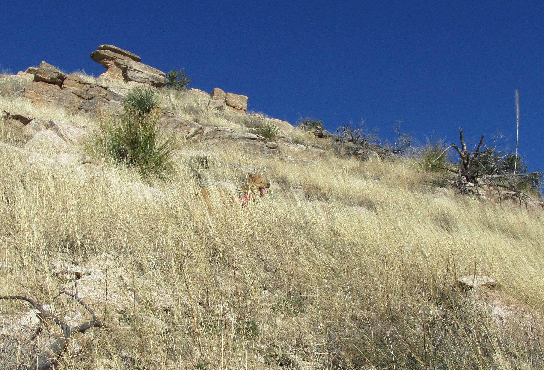 Tucson Hiking Trails Dog Friendly