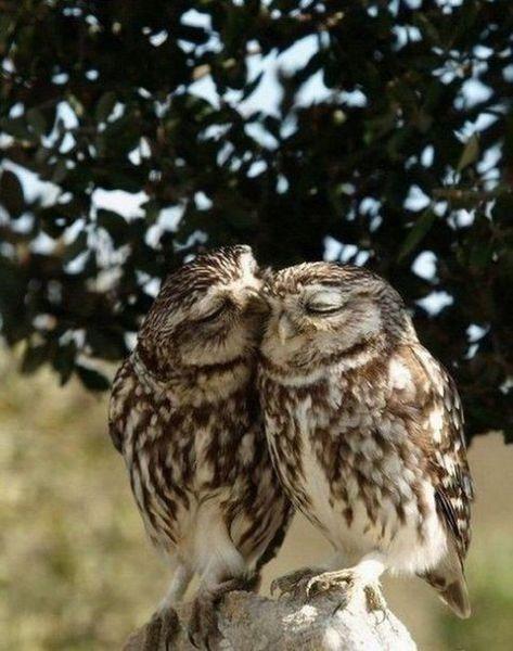 HIKE THE NORMAN BIRD SANCTUARY - League of Extra-Ordinary ...