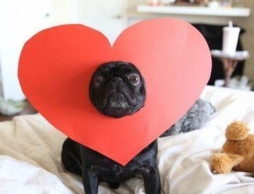 Casar é chic ! , *: Ensaio de Save the date com pug !