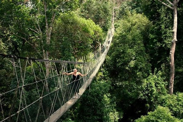 Come May TLC brings you on an adventure to explore Malaysiau0027s Taman Negara! Legally declared an area for conservation in 1938 this 130 million-year-old ... & Taman Negara u2013 The Lost World!