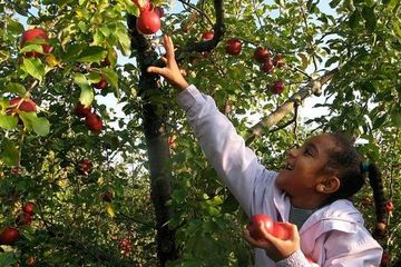 Image result for APPLE ORCHARD GIF