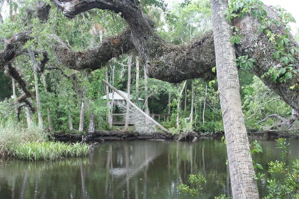 Cotee River Guided Paddle Tour @ Gill Dawg | Port Richey | Florida | United States