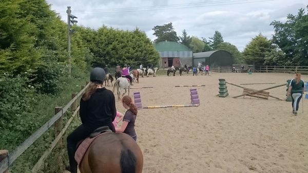 Horse Riding Training or Trekking @ Killegar Stables | Killegar Wood | Wicklow | Ireland