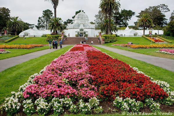 Flower Photography In Golden Gate Park Dahlias And The