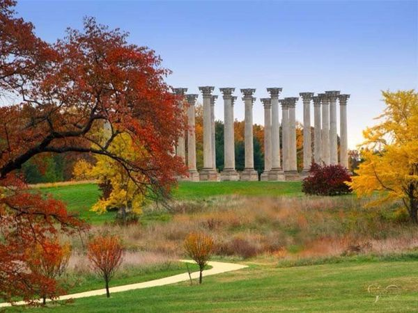 Image result for national arboretum
