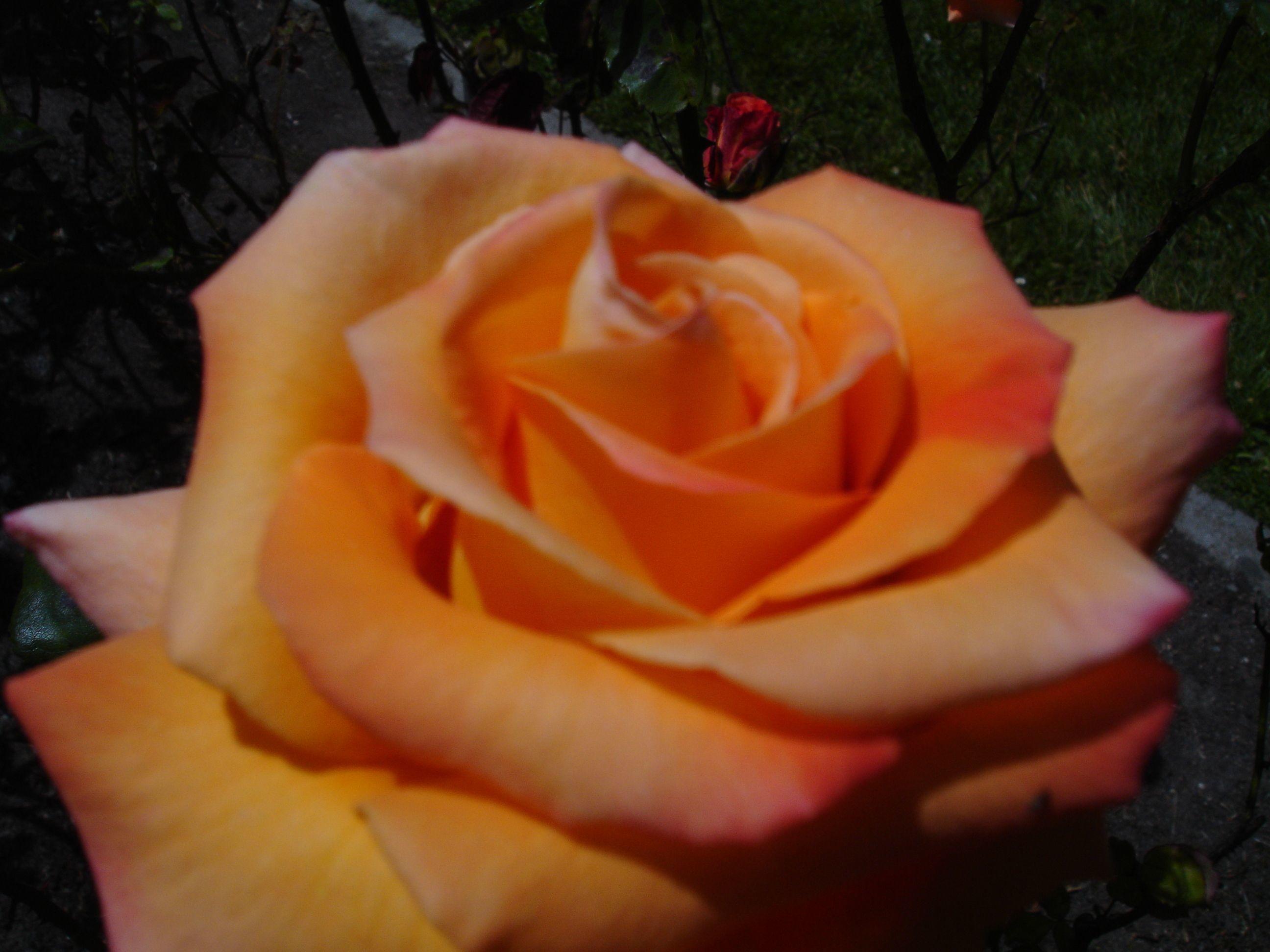 gardening singles dating site