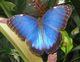 Blue M.