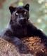 catty_big