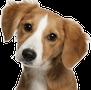 SHELTER ME-Help Shelter Pet Get ADOPTED